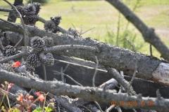 Wycieczka-rowerowa-do-Dzikiego-Boru-89