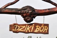 dziki bor 2013-2014 (28)